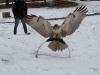 Snowy landing