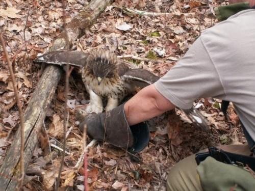 Maddie captures a squirrel